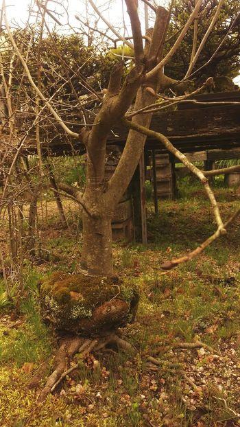元鉢植え 鉢植え Tree_collection  Tree Original Potted Growing Up