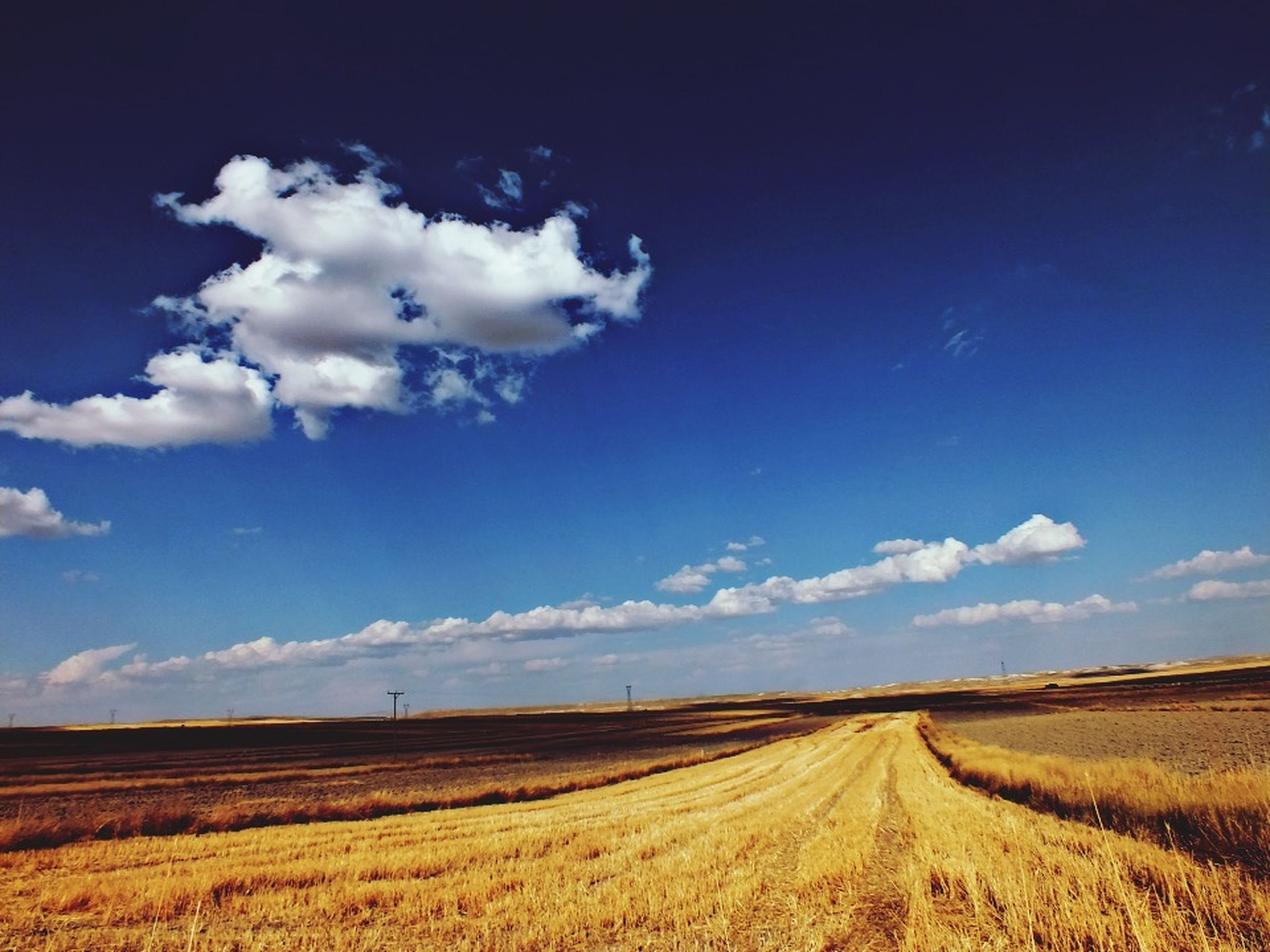landscape, agriculture, field, rural scene, tranquil scene, sky, farm, tranquility, crop, scenics, horizon over land, nature, beauty in nature, cloud, blue, cloud - sky, cultivated land, growth, harvesting, grass