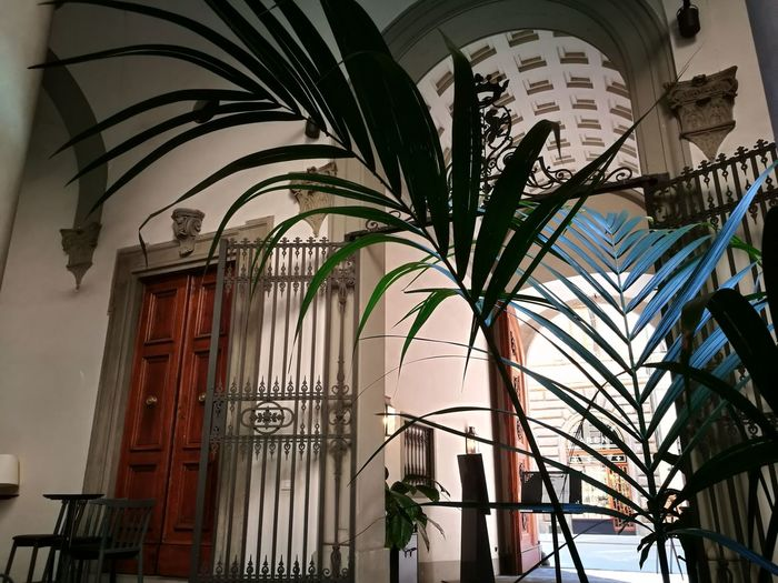 Italy Trees Plant Green Garden Garden Photography Bar Cafe Coffee Ancient Ancient Architecture Ancient Wall Community Community Outreach No Filter Florence Florence Italy Firenze City Palm Tree Architecture Built Structure Building Exterior Arch Historic Archway History Building Historic Building