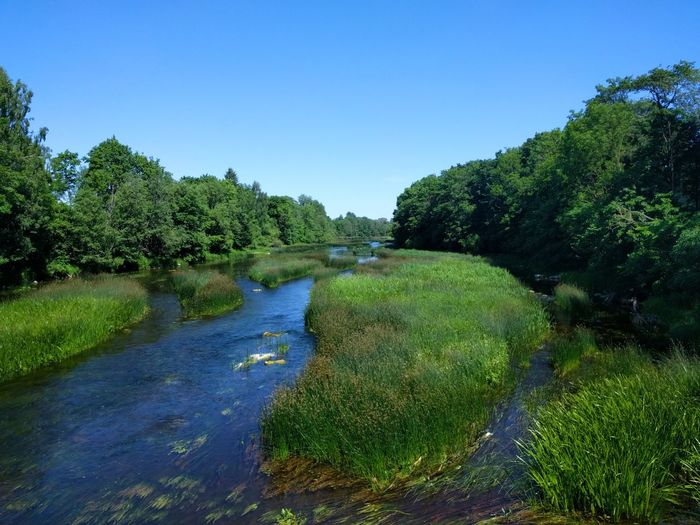 Beautiful Estonia Riverside River View River Rippsild Joesuu EyeEmNewHere Tree Water Clear Sky Blue Sky Plant Green Color Greenery Tranquil Scene Calm Tranquility