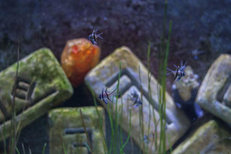 Aquarium Animal
