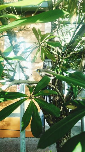 Leaf Growth Plant Nature Green Color No People Tree Sunlight Day Beauty In Nature Outdoors Palm Tree Greenhouse Freshness Close-up