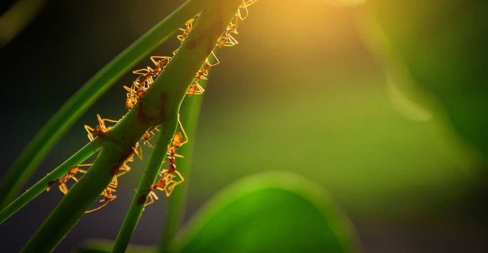 Close-up of red ants on plant
