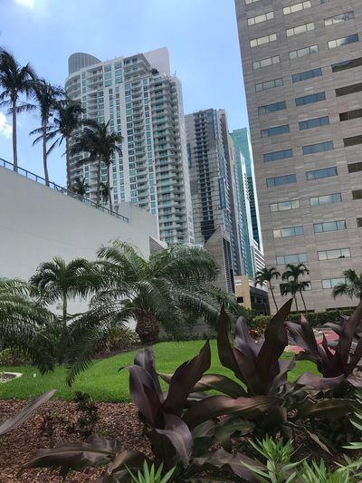 Building Exterior Built Structure Architecture Plant Building City Tall - High