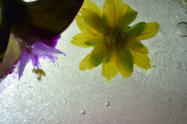 Frozen water, bubbles and plants freeze up. Frozen Ice Water Drops Background Beauty In Nature Bubble Close-up Creative Day Design Designing Flower Flower Head Fragility Freeze Freshness Imagery Indoors  Nature No People Petal Wallpaper Water Yellow Zero Degrees