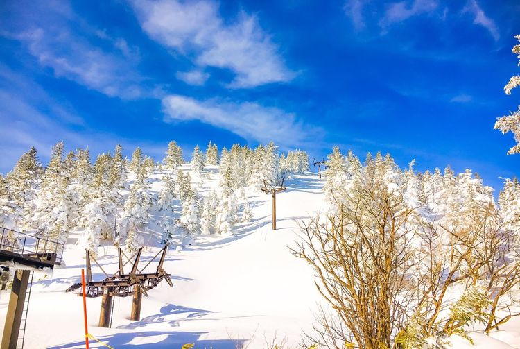 Streamzoofamily Thisismyworld Snowboarding Blueblue Snow Winter Nature Beauty In Nature Cold Temperature Tree Sky Shades Of Winter Shades Of Winter