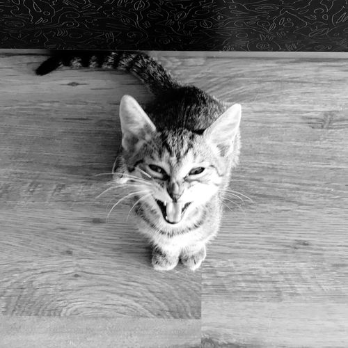 Cat Pets Feline Domestic Domestic Cat Domestic Animals Mammal One Animal Animal Looking At Camera High Angle View Indoors  Whisker No People Day EyeEmNewHere