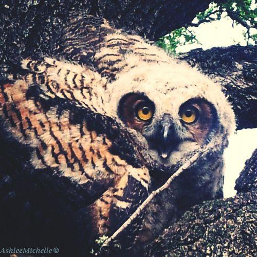 Photography Owls Texastreasures Amateur Photography