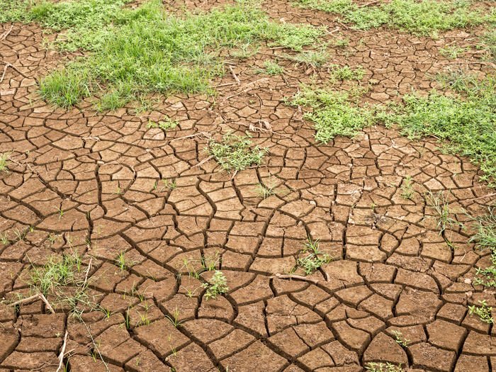 View of drought land, cracked ground in summer season. Warm weather effect to season change. Abstract view of dry earth. Agriculture Arid Climate Brown Close-up Cracked Day Desert Drought Dry Environment Environmental Issues Global Warming Grass Ground Growth High Angle View Land Mud Nature No People Outdoors Plant Summer Textured  Water