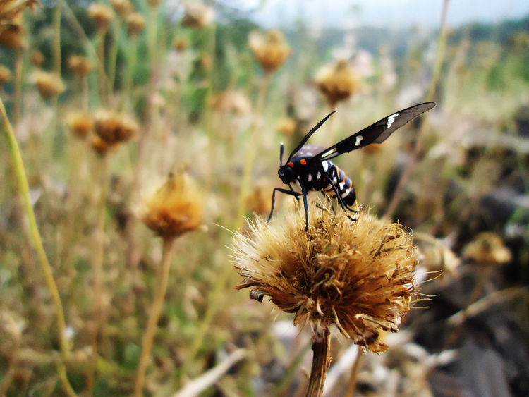 Insect Nature Focus On Foreground Flower Animals In The Wild Close-up Plant Beauty In Nature One Animal Animal Themes Outdoors No People Growth Fragility Day Thistle Freshness Flower Head Pollination Costa Rica❤ Nature Beauty In Nature Animal Wildlife