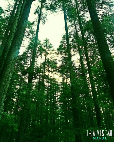 Low Angle View Green Color Full Frame Tree Nature Backgrounds No People Growth Sky Beauty In Nature Close-up Day Outdoors Sunset Travel Photography Daytime Scenics Beauty In Nature Low Angle View Cloud - Sky Manali ,Himachal Pradesh Saumik Jor Travistar Nature Tree