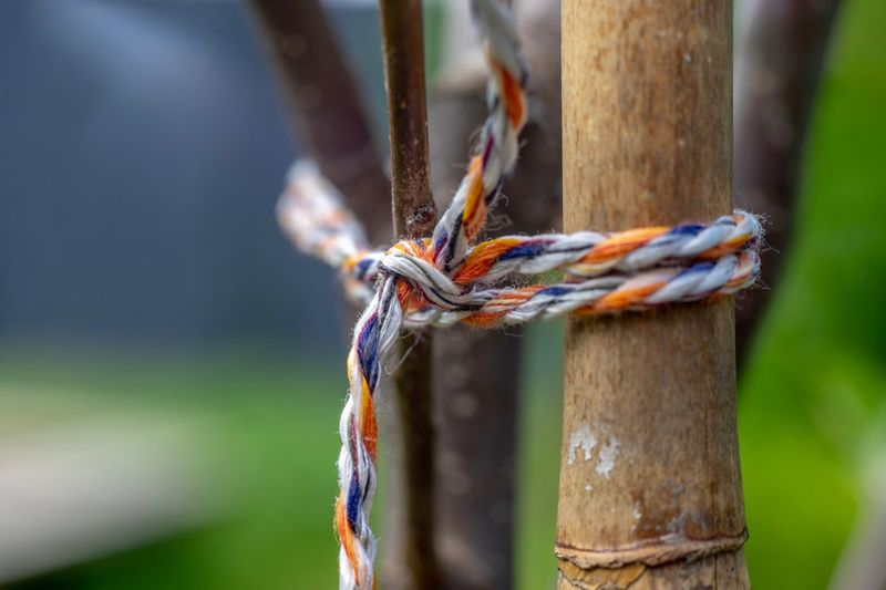 Close-up Focus On Foreground Day No People Rope Tied Up Strength Nature Wood - Material Plant Security