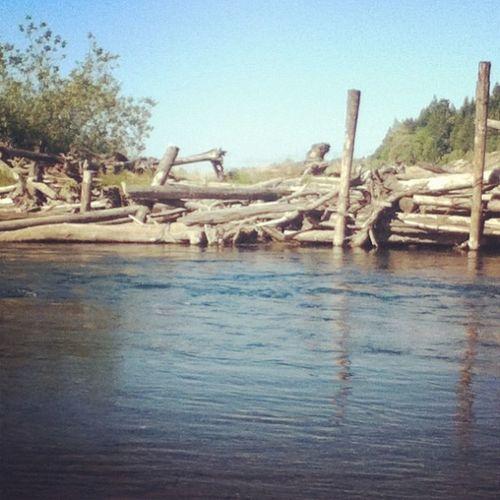 Gouley's corner. ?? Fishing River Skokomishriver Logs beautiful lovetheriver