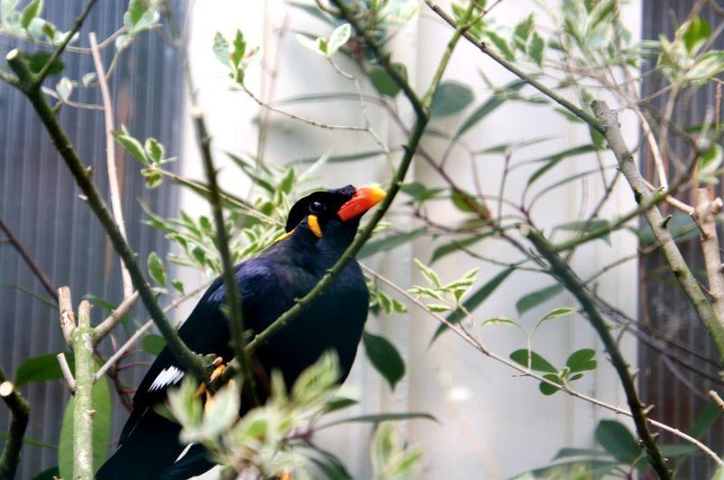 Vogel tier zoo