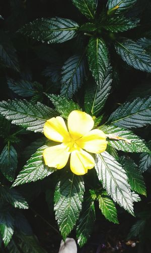Flower Yellow Nature Day Plant Petal Beauty In Nature EyeEmNewHere ♥