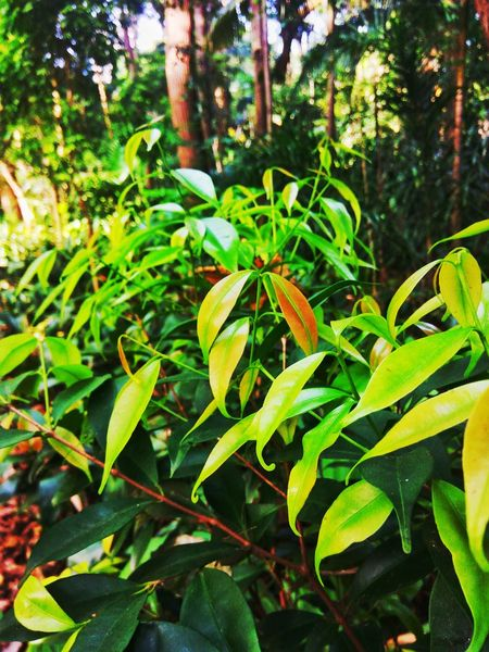 Growth Green Color Plant Leaf Nature Outdoors Day No People Beauty In Nature Close-up Tree Fragility Freshness São Paulo EyeEm Eyeemphotography Outdoorphotography South America Green Front View LoveSP Trianonmasp Paulista Avenue Forest Forest Photography