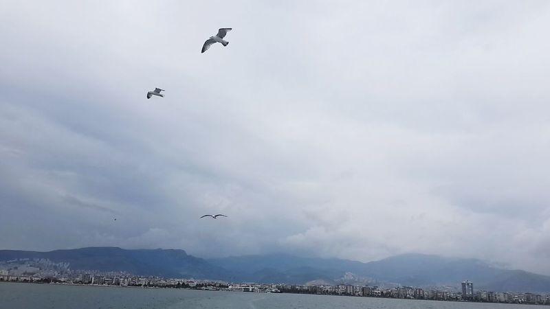 Turkey Turkey Izmir Sea Nature Seagulls Steamship Ferryboat Deniz Martı Feribot