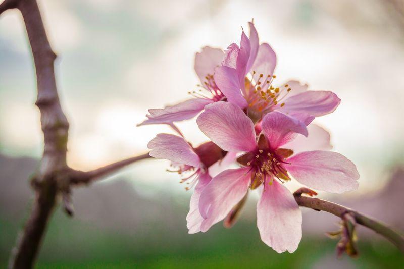 Photo Photography Photooftheday Spring Springtime Spring Flowers Enjoying Life Bestoftheday Best  EyeEm Love