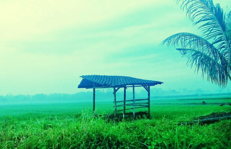 Green Color Grass Nature Outdoors Day No People Beauty In Nature Landscape