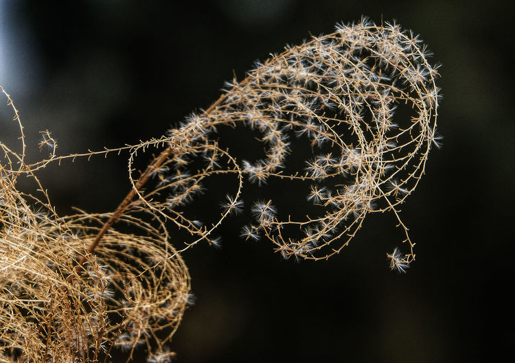 Winter in the wind Plant Nature Beauty In Nature Outdoors Tree Succulent Plant Cactus Night Dandelion Flower Thorn Complexity Dandelion Seed Seed Grasses In The Wind Prarie Grasses Winter Flower  Winter In The Garden