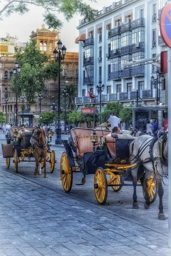 Street Carriage Hourses Touring The City Sevilla Spain Family Time Building Exterior City Horse Cart Streetphotography EyeEm Selects EyeEmNewHere Photography EyeEm Gallery