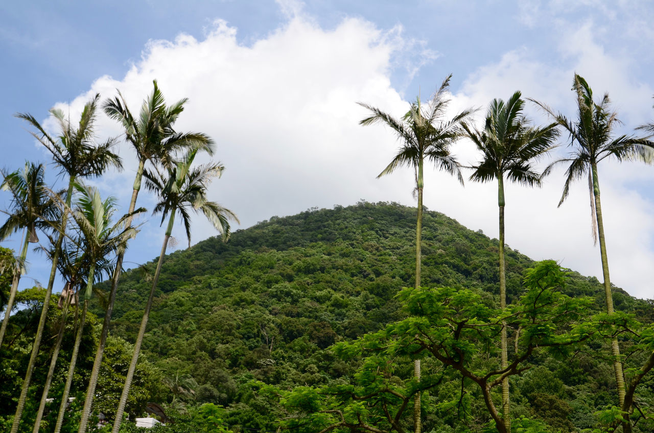 tree, palm tree, green color, growth, sky, nature, beauty in nature, no people, scenics, outdoors, day, mountain