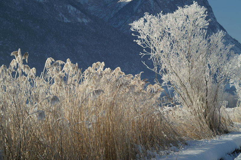 Close-up of snow covered plants on landscape