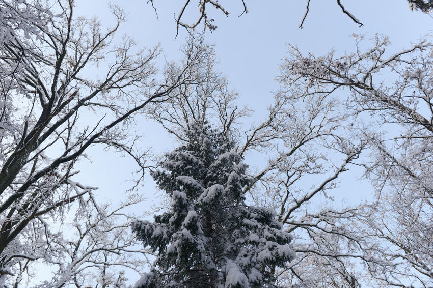 Beauty In Nature Branch Canada Christmas Christmas Tree Clear Sky Forrest Ice Low Angle View Nature Nature No People Norway Sky Snow Snow On The Ground Snow On Trees Snow ❄ Snowing Tree Winter Winter Forrest Winter Nature Winter Nature Outside Wintertime