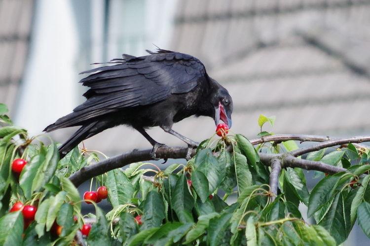 Bird perching on a plant