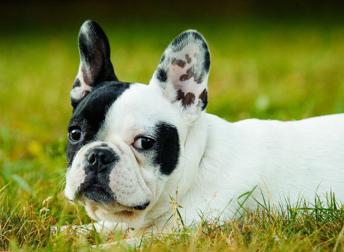 Close-up portrait of dog sitting on grassy field