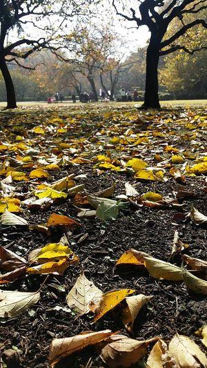 Fallen Leaves Autumn Leaves Autumncolours Tokyoautumn 2016 Shinjuku Gyoen National Garden Tokyopark Tokyopark Tokyoautumn2016
