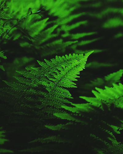 Perspicacious connection stimulus Green Color Leaf Nature Fern Plant No People Close-up Day Beauty In Nature Growth Freshness Frond Forest Tree Outdoors EyeEm Nature Lover Forestry Beauty In Nature Ferns Growth Landscape WoodLand