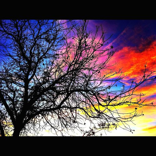 Multi Colored Tree Sky Bare Tree No People Silhouette Low Angle View Outdoors Nature Fiery Sunset... West Texas Skies