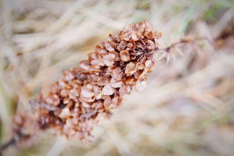 Seedcase Seedcase Seed Capsule EyeEm Selects Flower Flower Head Living Organism Rural Scene Close-up Grass Plant Landscape