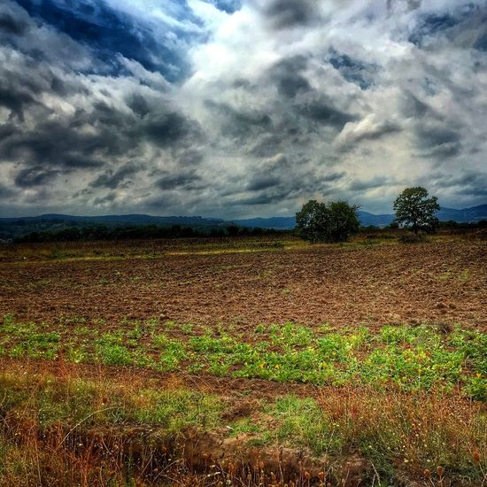 Bulgaria Nature Field Clouds And Sky Pumpkins Land