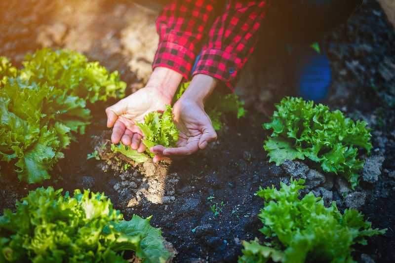 Agriculture Day Finger Food Food And Drink Gardening Green Color Growth Hand Holding Human Body Part Human Hand Leaf Lifestyles Nature One Person Outdoors Plant Plant Part Planting Real People Selective Focus
