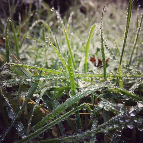 Grasdrop First Eyeem Photo
