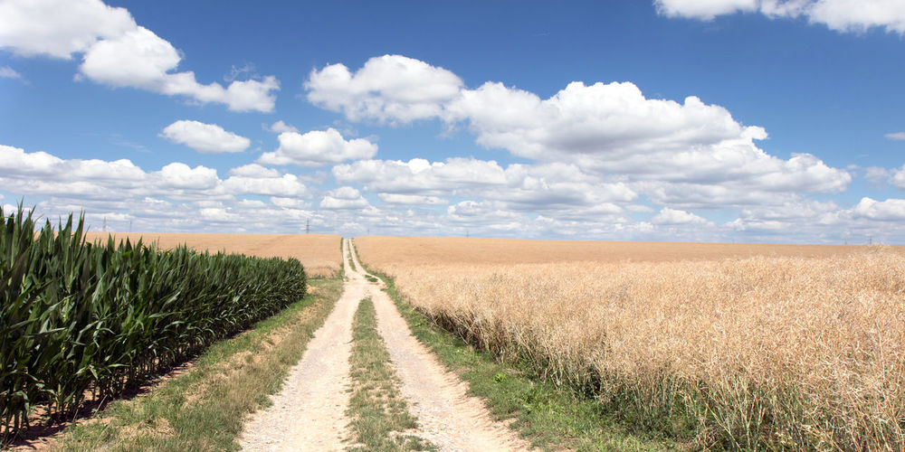 Dirt road amidst agricultural field against sky