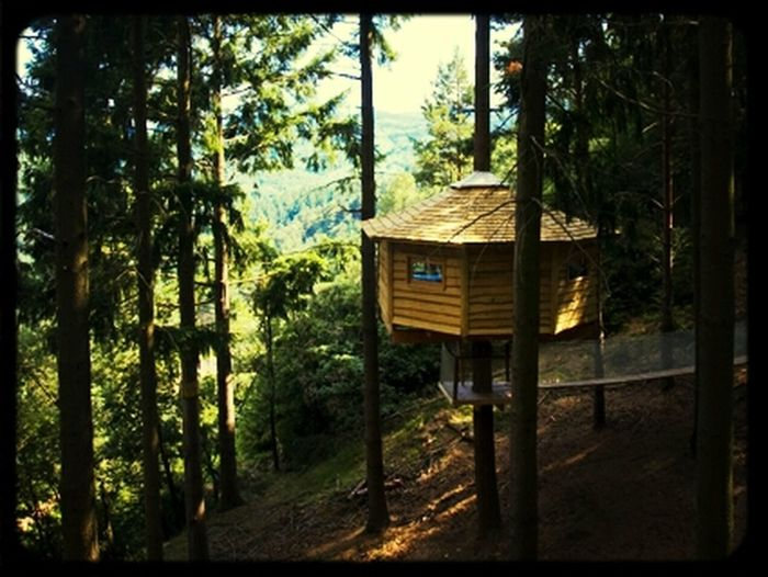 Relaxing Love Trees Photo House Keep Calm Calm Cabane Treehouse