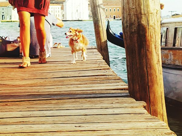 On The Bridge Photography In Motion People Of The Oceans People Dog Goldenretriever People And Dog Seascape Sealife Lifestyles Life In Motion Life Is A Journey Colour Of Life Feel The Moments Capture The Moment Venice, Italy Feeling Freedom Telling Stories Differently Summer Views Learn & Shoot: Simplicity People Together Boat Dock People And Places Pet Portraits