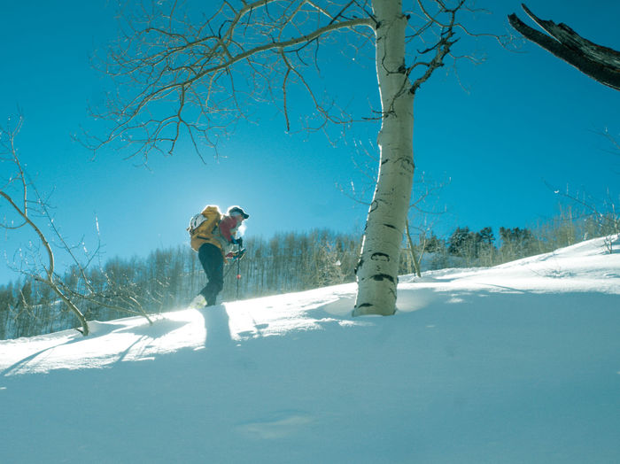 A skier hikes past an aspen tree Adult Adults Only Beauty In Nature Clear Sky Cold Temperature Day Full Length Leisure Activity Men Nature One Man Only One Person Only Men Outdoors People Ski Holiday Sky Snow Snowboarding Sport Standing Tree Vacations Warm Clothing Winter
