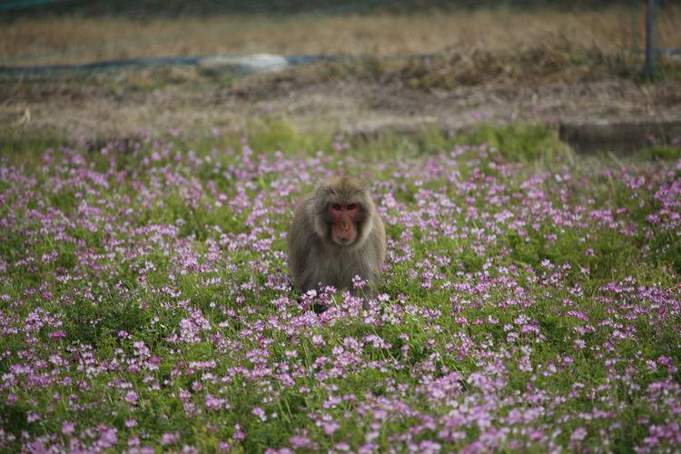 Monkey on landscape