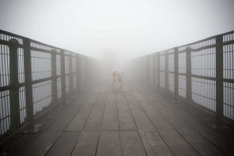 Bridge Fog Dog Up Close Street Photography Streetphotography Crossing Calm Mist Foggy Foggy Morning Animal City Street Misty Mistery Silent Hill Ghostly Ghost Town Ghosts Ghost