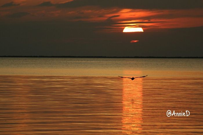 Pic taken with Canon T3i. Unedited. Birds #sunset #sun #clouds #skylovers #sky #nature #beautifulinnature #naturalbeauty #photography #landscape Shootermag EyeEm Birds EE_Daily: Orange Tuesday Life In Motion Reflection Sunset