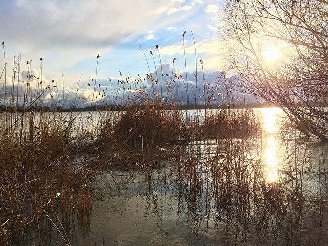 Reed Landscape Vilkovo Danube River OpenEdit