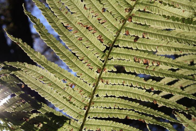 Farn Natur Nature Old Plants Pflanze  Pflanzen Pflanzenwelt Plant