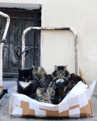 Five cats in the box. Group Of Cats Group Of Animals Team Warm Relax Cats Box Mammal Pets Domestic Animal Cat Feline Domestic Cat Domestic Animals Vertebrate Day Building Exterior Wall - Building Feature Relaxation Tabby Built Structure