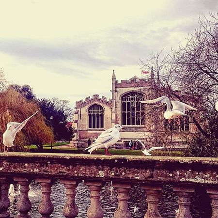 Birds near the water in Hitchin.. Birds Hitchin Stmarys Church Water Hertfordshire Winter December Flag Trees RiverHiz Picturesque Picoftheday ICAN Sony Sonyxperia XperiaZ3