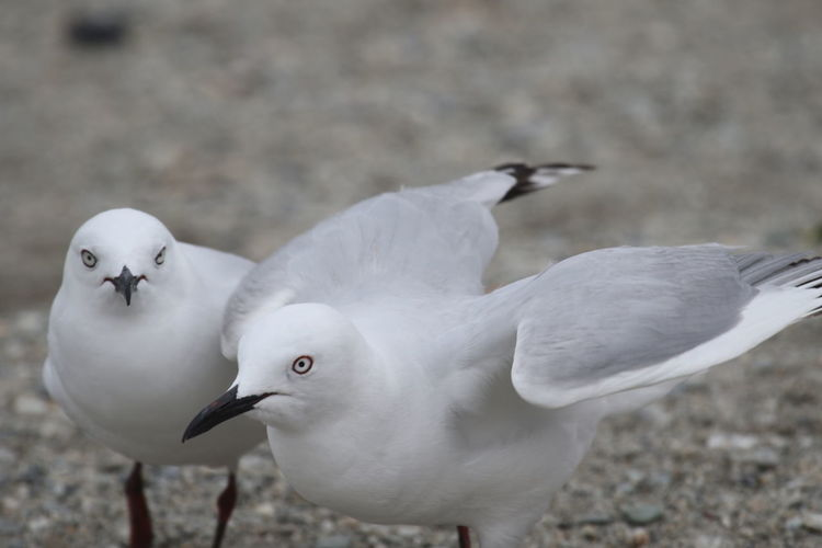 Close-up of birds