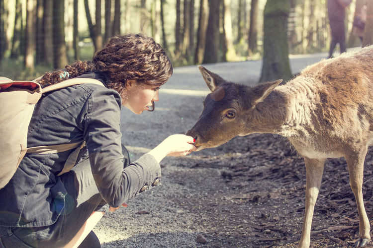 Side View Of Young Woman Feeding Deer On Road